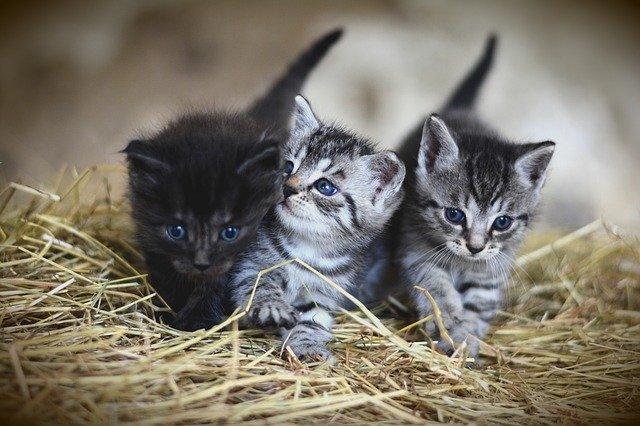 koťata na slámě.jpg