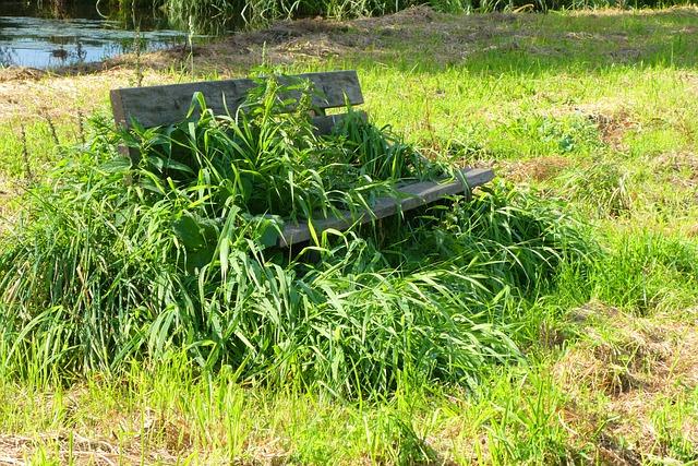 lavička na sezení zarostlá trávou