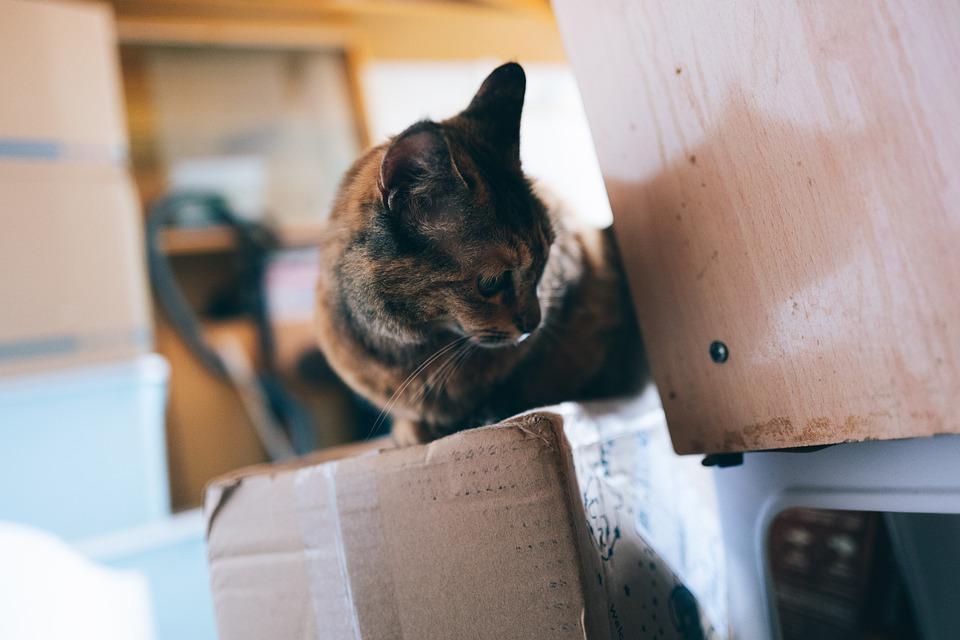 kočka na krabici