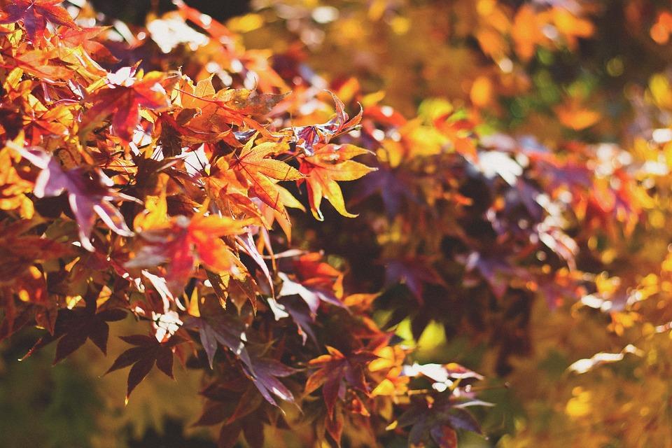 podzimní_příroda