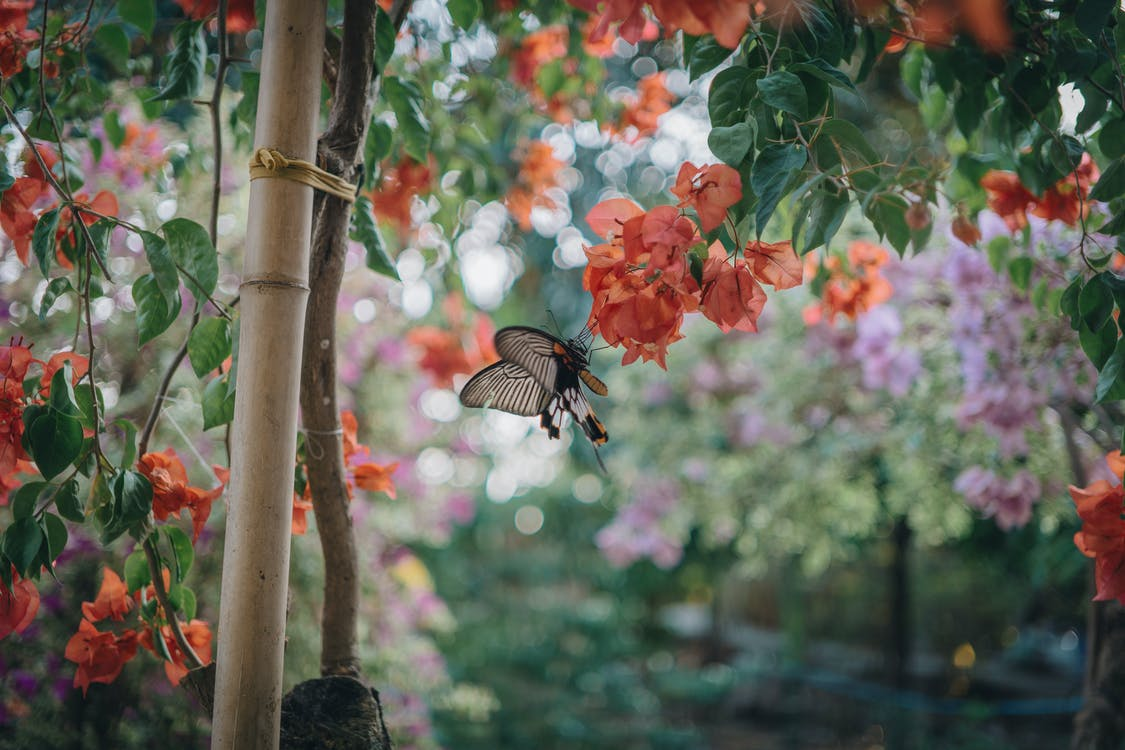 zahrada motýl